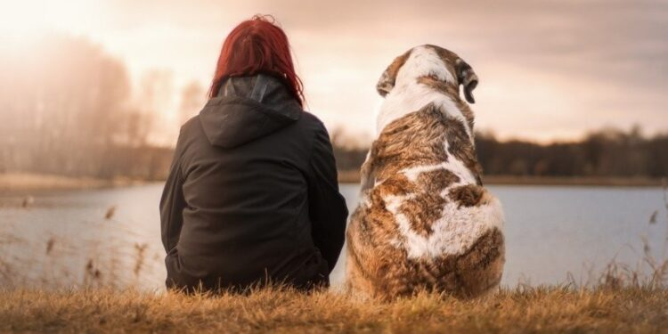 How to take good care of your pet dog