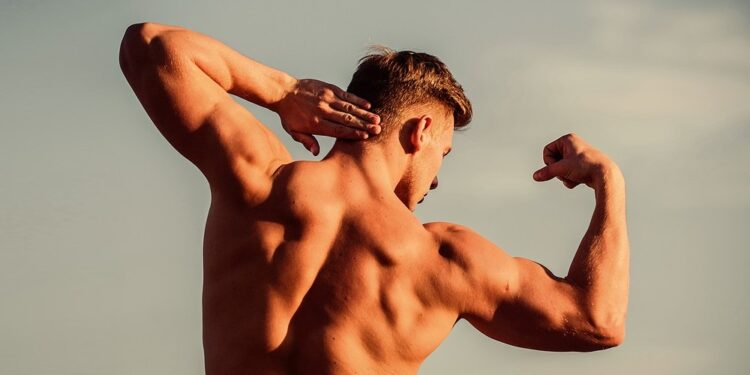 Essential herbs for building muscles