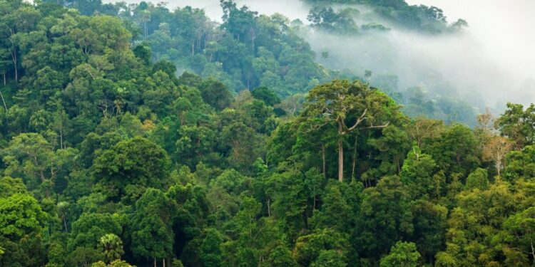 Top 10 largest forests in the world